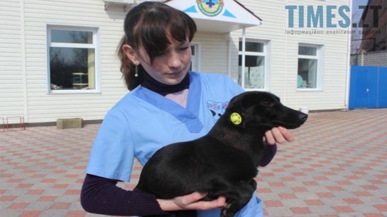 Picture 6 - Безпритульні тварини: собаче життя по-бердичівськи