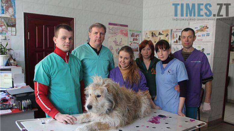 Picture 7 - Безпритульні тварини: собаче життя по-бердичівськи