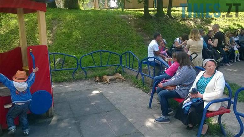Picture 9 - Безпритульні тварини: собаче життя по-бердичівськи