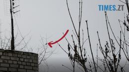 4 260x146 - 21 лютого у Житомирі побачили першу весняну пташку (відео)