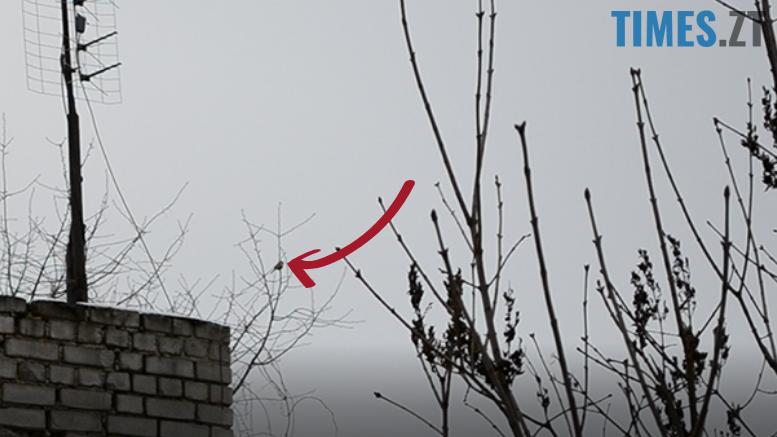 4 - 21 лютого у Житомирі побачили першу весняну пташку (відео)