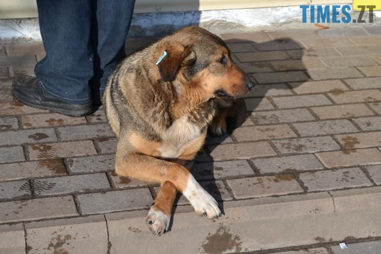 Проблема безпритульних тварин в Житомирі | TIMES.ZT