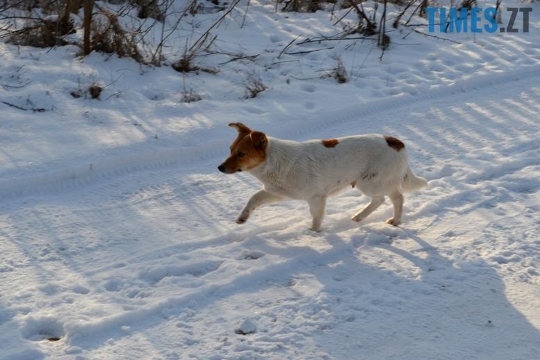 DSC 0707 - Тварини на снігу: ви «за» чи «проти» них? (фото, відео)