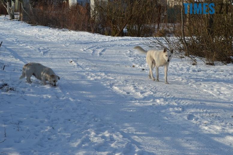 DSC 0717 - Тварини на снігу: ви «за» чи «проти» них? (фото, відео)