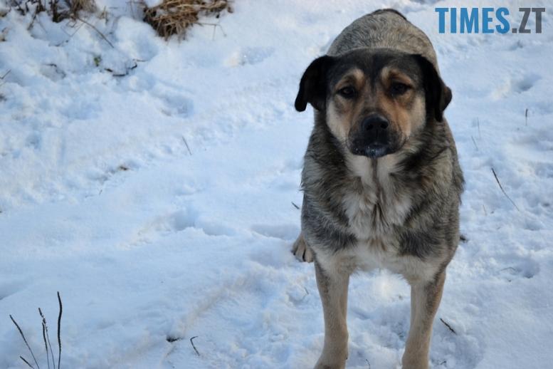 DSC 0724 - Тварини на снігу: ви «за» чи «проти» них? (фото, відео)