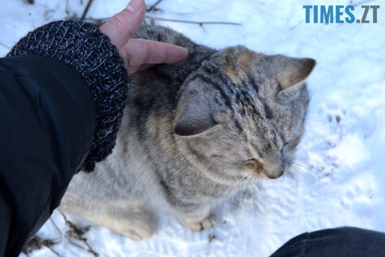 DSC 0747 - Тварини на снігу: ви «за» чи «проти» них? (фото, відео)