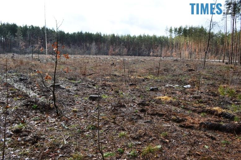 6 10 - Зубко пообіцяв захистити ліс у Зарічанах, який нищать місцеві «феодали» (відео)