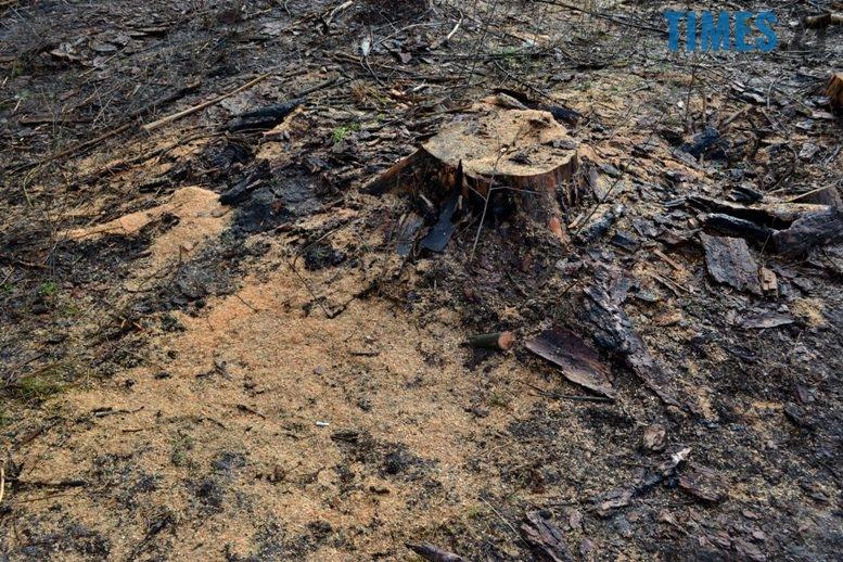 7 7 - Зубко пообіцяв захистити ліс у Зарічанах, який нищать місцеві «феодали» (відео)