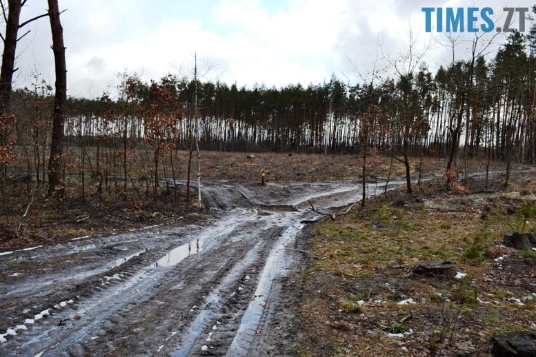 8 9 - Зубко пообіцяв захистити ліс у Зарічанах, який нищать місцеві «феодали» (відео)