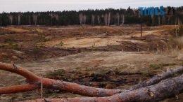 24 260x146 - Пустеля під Коростишевом: чиновники та гендлярі нищать ліс заради піску (фото, відео)