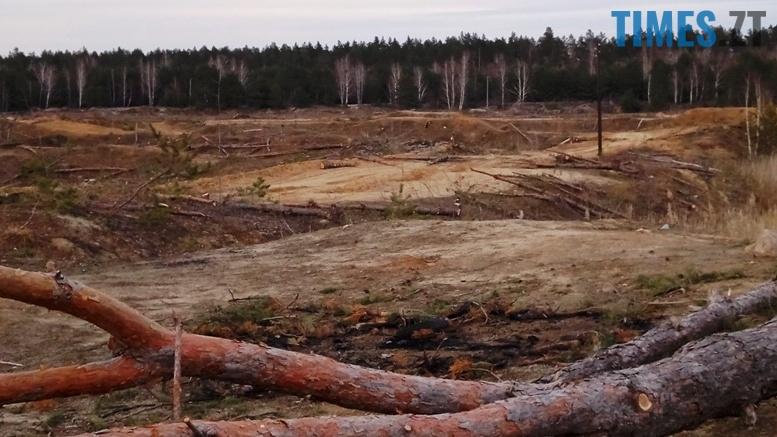 24 - Пустеля під Коростишевом: чиновники та гендлярі нищать ліс заради піску (фото, відео)