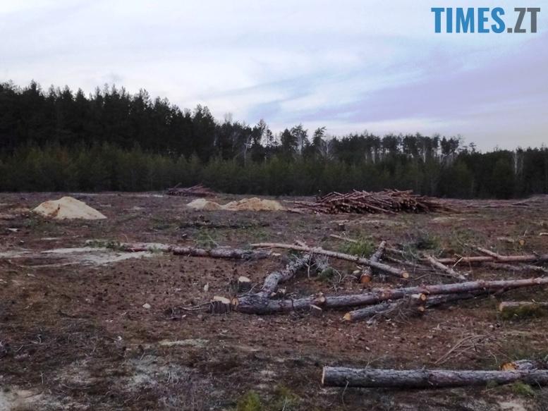 6 8 - Пустеля під Коростишевом: чиновники та гендлярі нищать ліс заради піску (фото, відео)