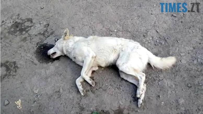 16 - У Коростишеві озвірілі істоти масово труять собак