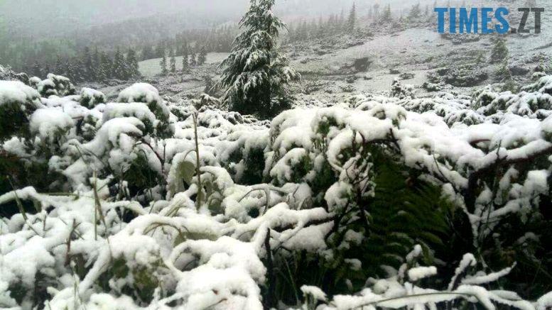 .jpeg - Літо таки аномальне: у Житомирі осіння погода; у Карпатах сніг