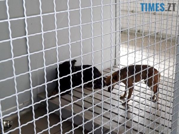 в Житомирі 6 - У Коростишеві озвірілі істоти масово труять собак