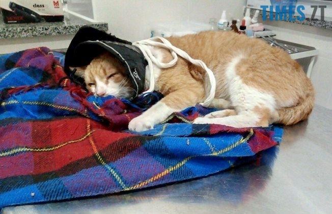 Кіт в лікарні. Житомир  | TIMES.ZT