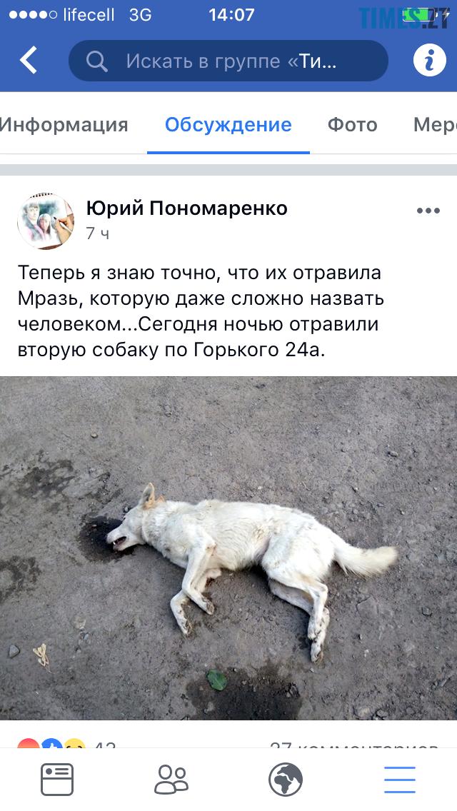 2 3 - У Коростишеві озвірілі істоти масово труять собак