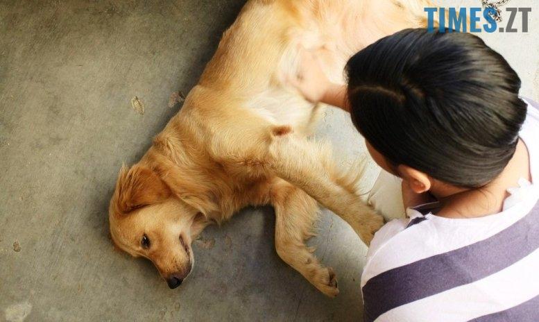 Отруєна собака  | TIMES.ZT