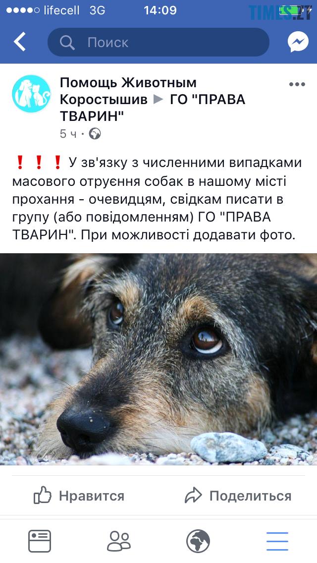 5 - У Коростишеві озвірілі істоти масово труять собак
