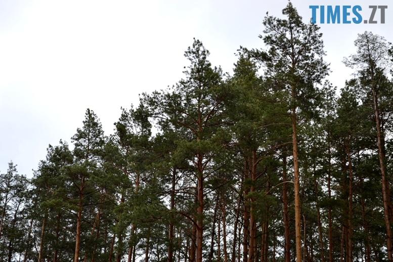ліс - Як зарічанський ліс зникає у кишенях місцевих «феодалів» (частина І)