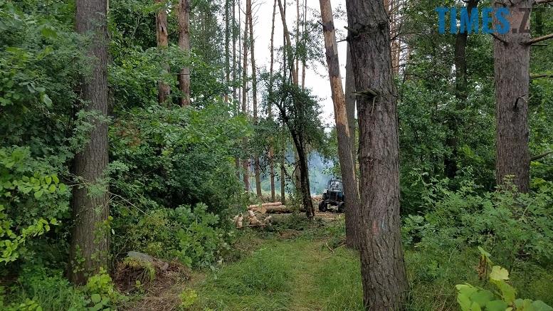 фото 1 - Мародерів, які нищать ліси України, хочуть «садити» довічно (фото, відео)