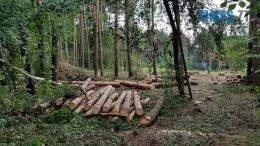 фото 2 1 260x146 - Житомиряни збентежені тотальним винищенням лісів. Що робити? (відео)