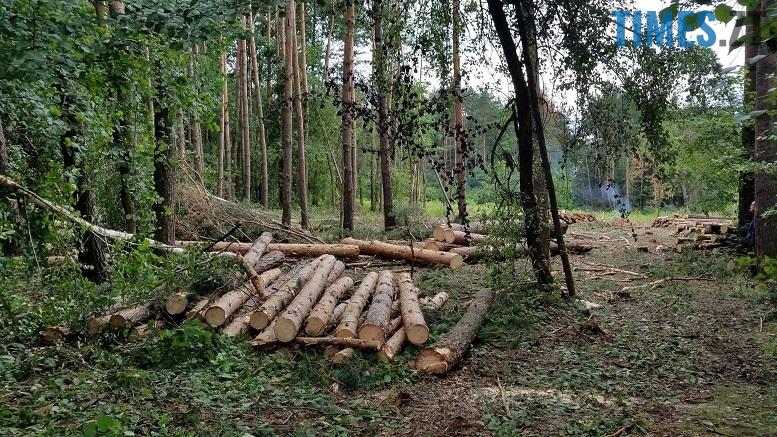 фото 2 - Мародерів, які нищать ліси України, хочуть «садити» довічно (фото, відео)