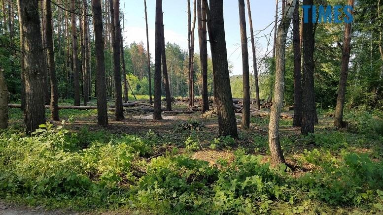 фото 3 - Мародерів, які нищать ліси України, хочуть «садити» довічно (фото, відео)