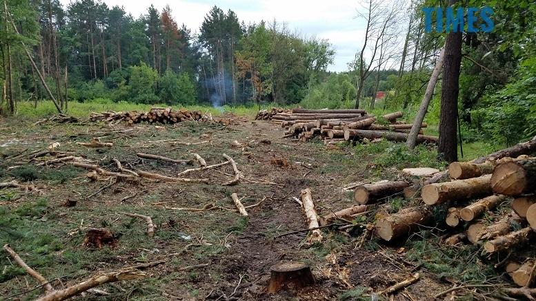фото 4 - Мародерів, які нищать ліси України, хочуть «садити» довічно (фото, відео)
