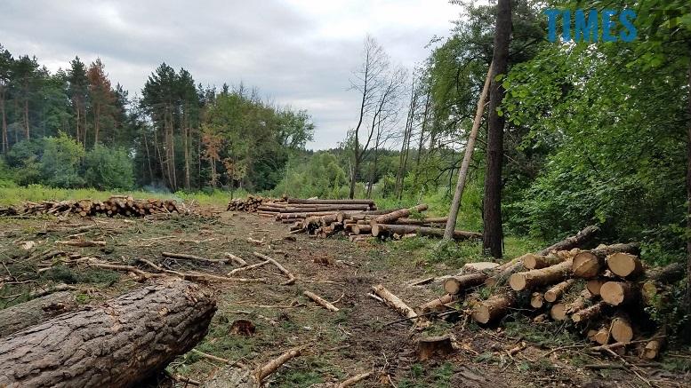 фото 5 - Мародерів, які нищать ліси України, хочуть «садити» довічно (фото, відео)