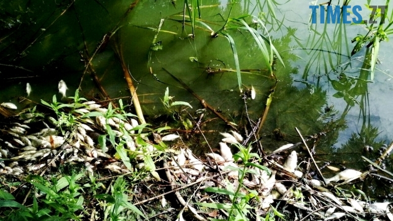 1 - Житомиряни шоковані станом малих річок Гуйви і Кам'янки