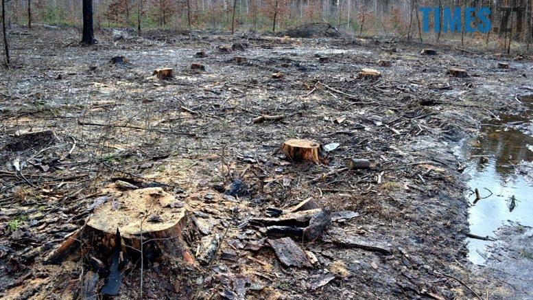 2 2 - Як зарічанський ліс зникає у кишенях місцевих «феодалів» (частина ІІ)