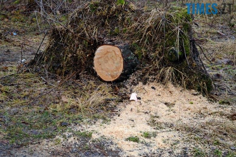 пень - Як зарічанський ліс зникає у кишенях місцевих «феодалів» (частина ІІ)
