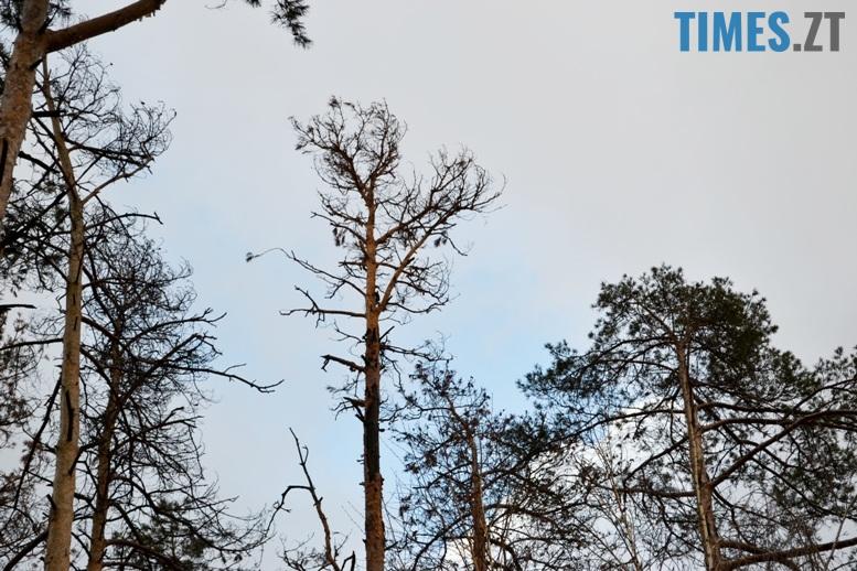 дерева 2 - Як зарічанський ліс зникає у кишенях місцевих «феодалів» (частина І)