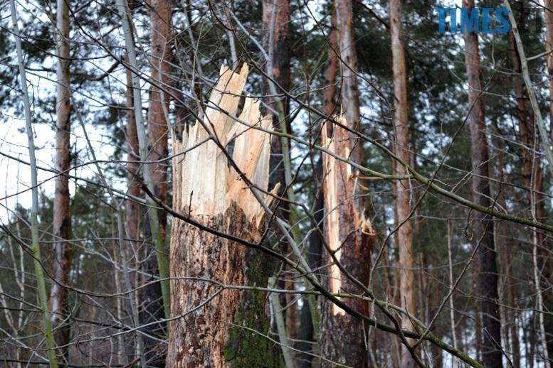 дерева - Як зарічанський ліс зникає у кишенях місцевих «феодалів» (частина І)