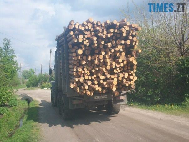 13091902 502646516602095 7878223095464684300 n - Мародерів, які нищать ліси України, хочуть «садити» довічно (фото, відео)