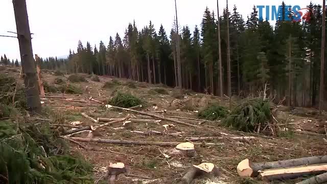 1385819 main.mp4 - Мародерів, які нищать ліси України, хочуть «садити» довічно (фото, відео)