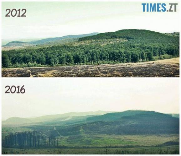 17457394 1278023282274058 3032837702547858492 n - Мародерів, які нищать ліси України, хочуть «садити» довічно (фото, відео)