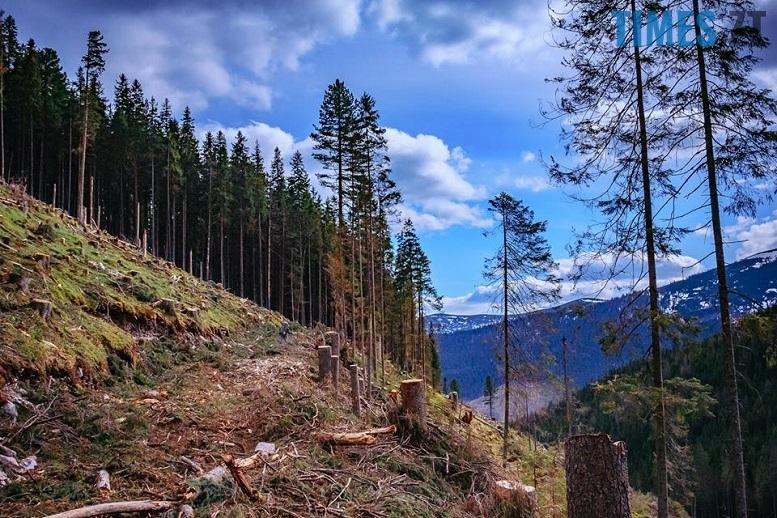 18485558 1342975575785406 4496096059203551338 n - Мародерів, які нищать ліси України, хочуть «садити» довічно (фото, відео)