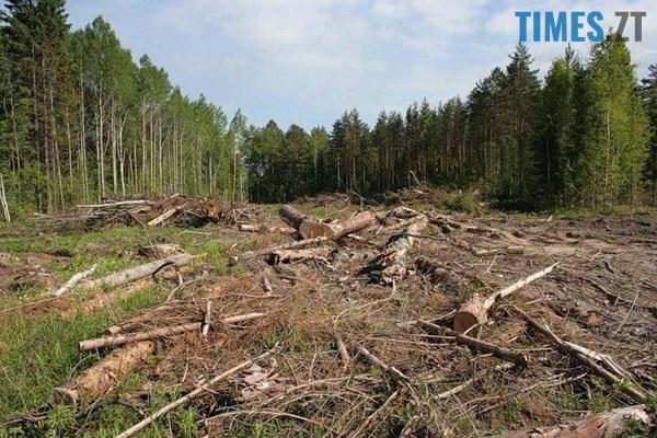 470849 - Мародерів, які нищать ліси України, хочуть «садити» довічно (фото, відео)