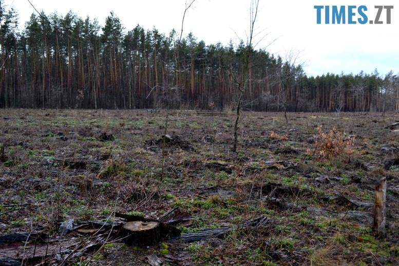 DSC 0967 - Як зарічанський ліс зникає у кишенях місцевих «феодалів» (частина І)