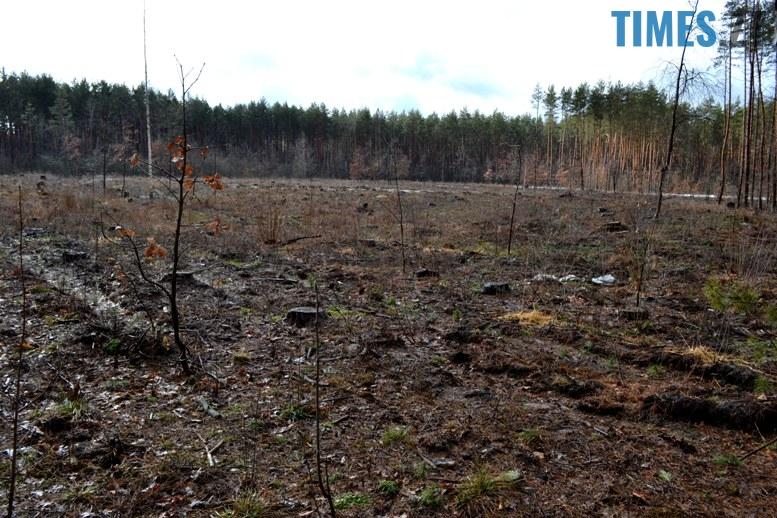 DSC 0992 - Як зарічанський ліс зникає у кишенях місцевих «феодалів» (частина І)