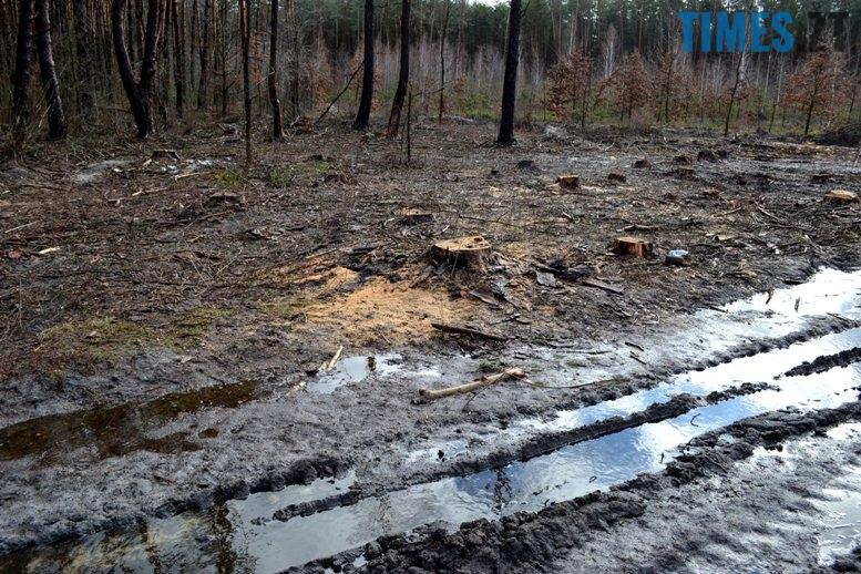 DSC 1000 - Як зарічанський ліс зникає у кишенях місцевих «феодалів» (частина І)