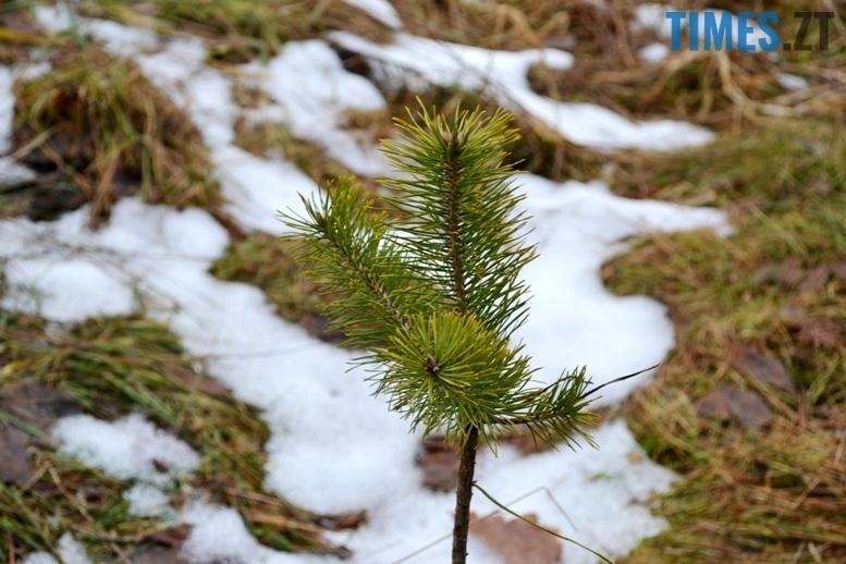 DSC 1014 - Як зарічанський ліс зникає у кишенях місцевих «феодалів» (частина І)