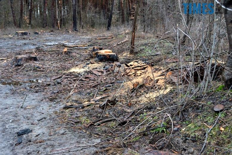 DSC 1019 - Як зарічанський ліс зникає у кишенях місцевих «феодалів» (частина І)