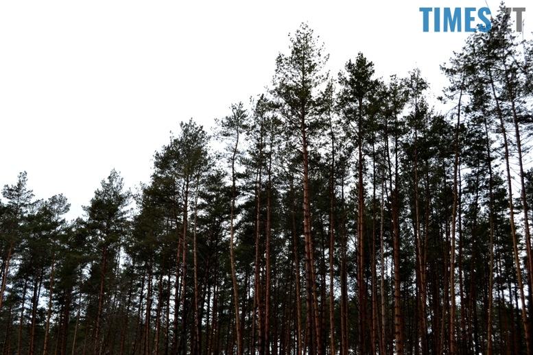 DSC 1026 - Як зарічанський ліс зникає у кишенях місцевих «феодалів» (частина І)