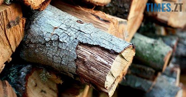 Drova - Мародерів, які нищать ліси України, хочуть «садити» довічно (фото, відео)