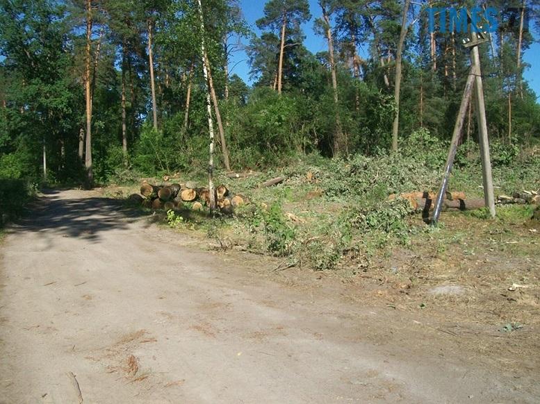 IMG 2 - Мародерів, які нищать ліси України, хочуть «садити» довічно (фото, відео)