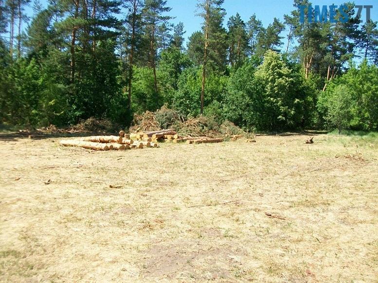 IMG 3 - Мародерів, які нищать ліси України, хочуть «садити» довічно (фото, відео)