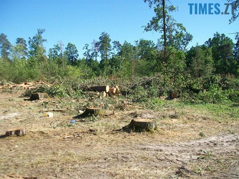 IMG 4 - Мародерів, які нищать ліси України, хочуть «садити» довічно (фото, відео)